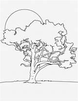 Tree Coloring Oak Outline Night Banana Trees Drawing Angel Drawings Printable Sketch Template Getcolorings Clip Bare Colorluna Leaf Pdf Luna sketch template