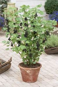 Balkonblumen Richtig Pflanzen : tomaten richtig in k bel pflanzen ernte der balkon und tomaten ~ Frokenaadalensverden.com Haus und Dekorationen