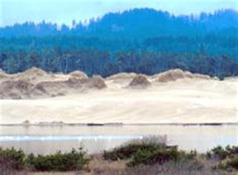 soil profile and succession taiga