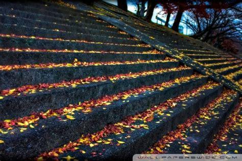 leaves resting  steps ultra hd desktop background