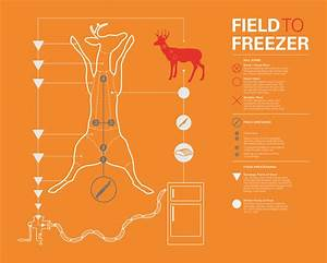 Info Graphic For Field Dressing A Deer