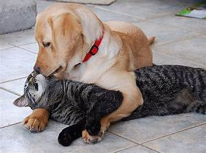 Cats And Dogs: Cats and Dogs Kissing