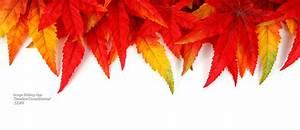autumn fall bg Facebook Cover - timelinecoverbanner.com