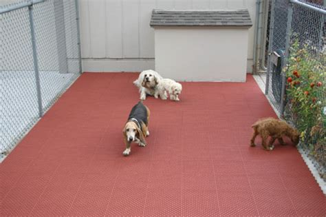 Kennel Flooring Ideas by Pet Beds Crates And Kennels House Accessories Pet