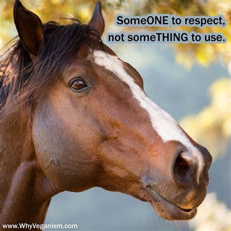 vegan going horses animals go