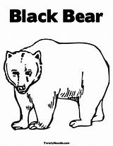 Coloring Bear Pages Hatchet Preschool Google Books Study Guide Printable Canadian Drawing Baby Worksheets Sheets Colouring Crafts Twistynoodle sketch template