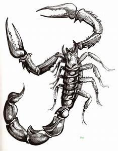 Scorpio tattoo designs - Tattoo designs