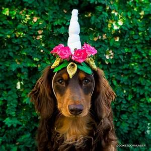 How to make a Unicorn Headband for your Dog - Doxies Down ...