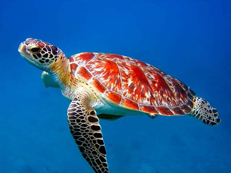 Sea Animals Wallpapers Free - top 27 sea animals wallpapers in hd