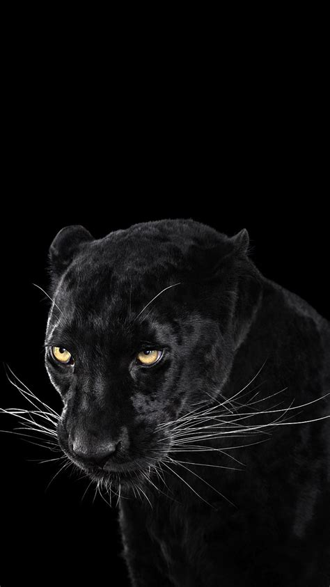Panther Animal Wallpaper - black panther wallpaper iphone wallpaper iphone wallpapers