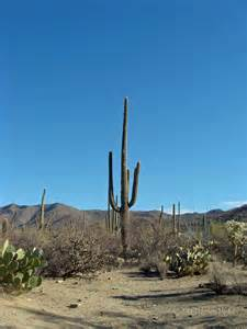 Arizona-Tucson Saguaro National Park