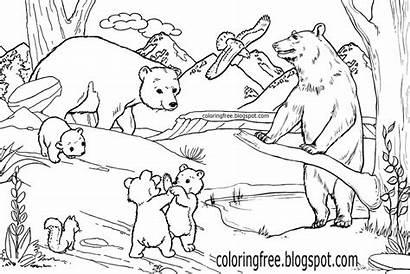 Coloring Wild Wildlife Animals Bear Printable Drawing
