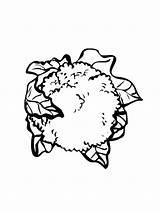 Cauliflower Coloring Pages Vegetables Bloemkool Kleurplaat Kleurplaten Recommended Mycoloring sketch template