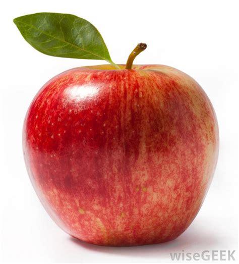 fruit   fruit trees