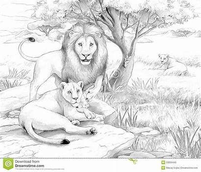 Lions Safari Coloring Sketch Lion Realistic Animals