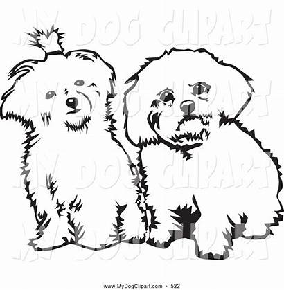 Dog Sitting Drawing Maltese Clip Coloring Template