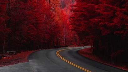 4k Pine Trees Wallpapers