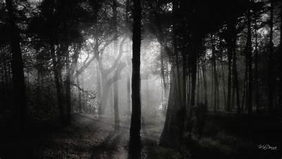 Dark Forest Wallpapers Desktop Woods Background Deep