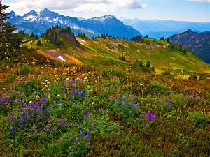 Nature, Landscape, Spring, Flowers, Mountain, Peaks, With, Snow