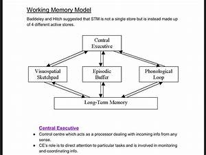 Working, Memory, Model, Revision