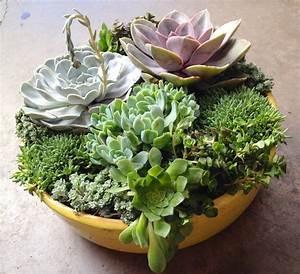 Fall Entertaining: Succulent Custom Planters - Sloat