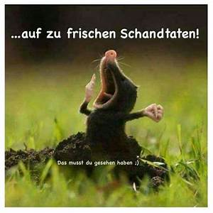 Guten Morgen Tierbilder : 799 best images about guten morgen on pinterest good morning coffee good morning images and ~ Frokenaadalensverden.com Haus und Dekorationen