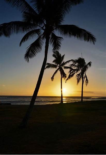 Trees Palm Sunset Tree Wallpapers Iphone Sun
