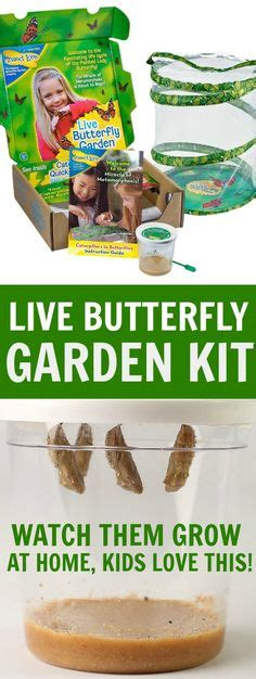 live butterfly garden great gift guide on gift guide gift