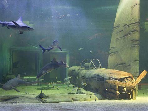 le seaquarium parcs de loisirs parcs animaliers le grau du roi gard languedoc roussillon