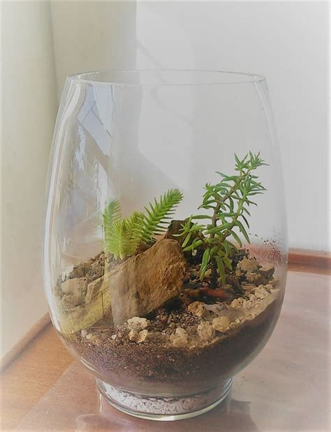 We import south african grocery products like flings, rusks, chocolate as well as importing wines and liquors. Oval Terrarium with Two Succulents • Terrariums For Sale • Glass Gardens