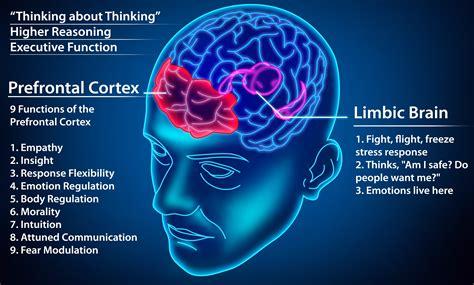 neuroscience  dating dating advice   brain