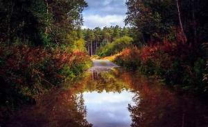 nature, , forest, , road, , trees, , autumn, , lake, , pond, , reflection, , boat, wallpapers, hd, , , , desktop, and