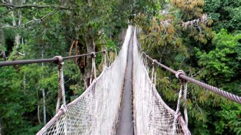 amazon canap amazon rainforest canopy walkway