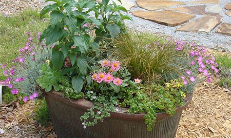 Learn About Container Gardening At The Molino Library
