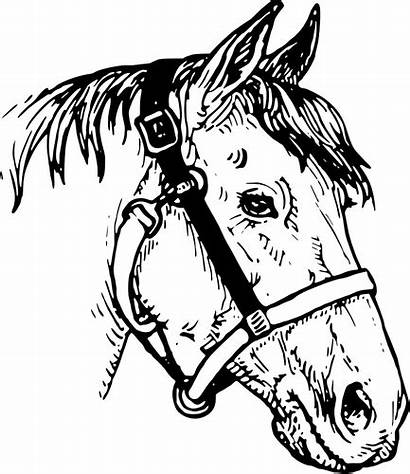 Clipart Horse Cavalo Head Clip Cabeca Horseshoe