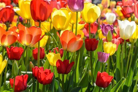 fiori da balcone primavera estate fiori da balcone primavera estate amazing balcone fiorito