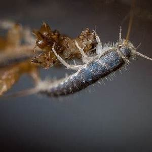 Hilfe Gegen Silberfische : wirksame hausmittel gegen silberfische ~ Michelbontemps.com Haus und Dekorationen