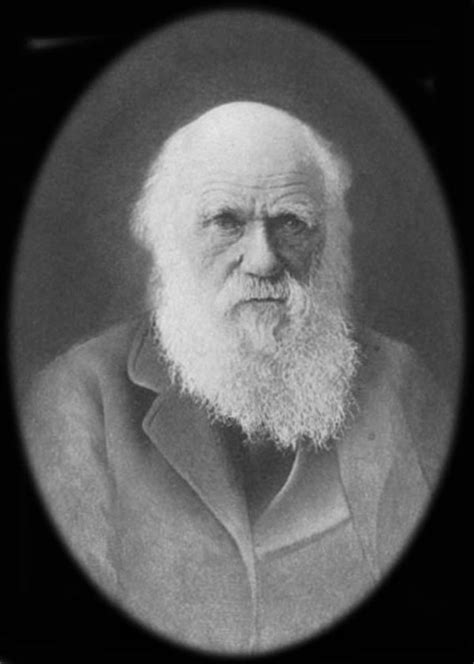 charles darwin resumen corto cu 225 l es la teor 237 a de darwin