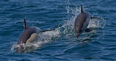 Boat Trip Estepona To Gibraltar by Gibraltar Excursion Boat Dolphins Tour Dolphin