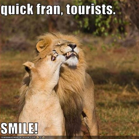 quick fran tourists smile cheezburger funny memes