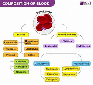 Composition Of Blood And Its Functions