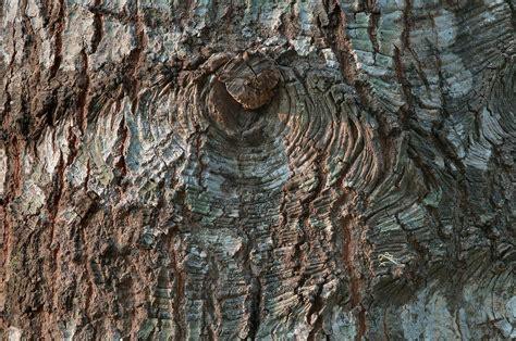 Photo 1100-12: Tree bark in Lick Creek Park. College ...