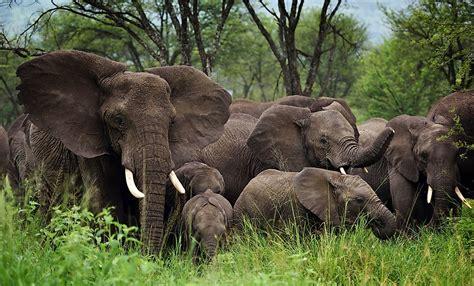 animals   groups worldatlascom