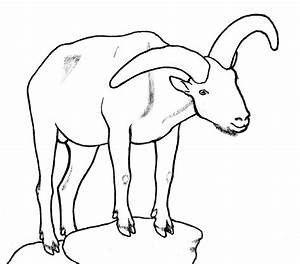 Image Of A Goat - AZ Coloring Pages