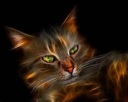 Cat Cool Backgrounds Wallpapers Desktop 1600 Cats