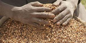 Top 10 Largest Pulses Producing Countries In The World 2019