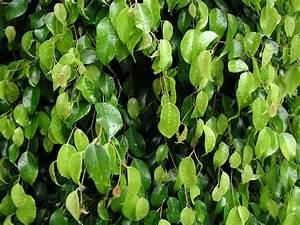Pianta Da Appartamento Verde ~ duylinh for
