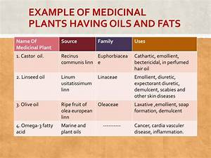PPT - Course: medicinal plants PowerPoint Presentation ...