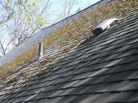 Moss On Roof Shingles Removal With Roof Pipe Proper Underlayment For Metal Roof Red Inn Boston Mansfield Foxboro Ma Modern Flat House Plans How To Shingle A Hip Garage Car Racks Autozone Superior Roofing Supply Greenville Sc Clean And Treat Rv Rubber Breathable