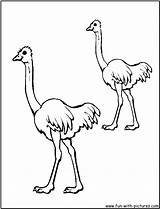 Coloring Emu Australian Animals Colouring Template Printable Popular Results Outline sketch template